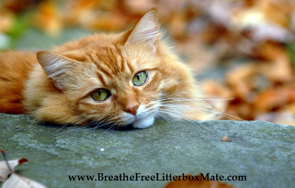 how to get rid of cat litter box odor
