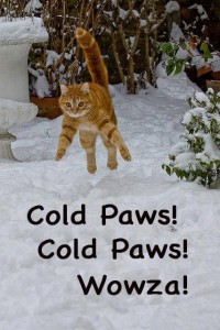 Cat.Cold Pawss Wowza