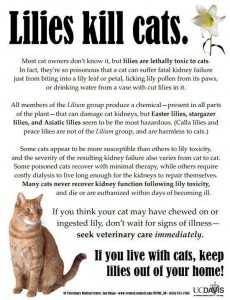 Cat.Lillies Kill Cats